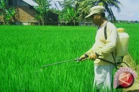 20121010ilustrasi-tanaman-padi